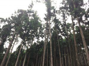 木のソムリエツアー第1回山を見る_05